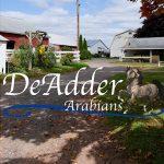 DeAdder Arabians