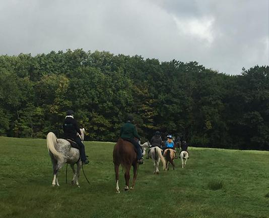 Arabian Horses Trail Ride